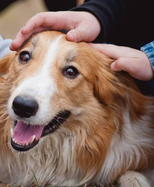 En votre absence votre chien n'attend qu'une seule chose : Votre retour !