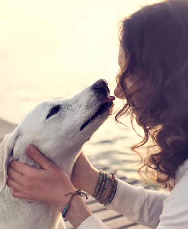 Observez le langage corporel de votre chien, il peut communiquer avec vous ce qu'il ressent !