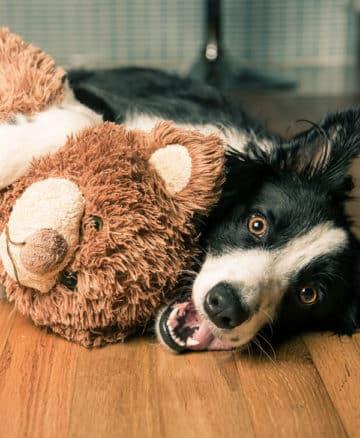 Votre animal vous confie ce qui lui est cher : ses jouets