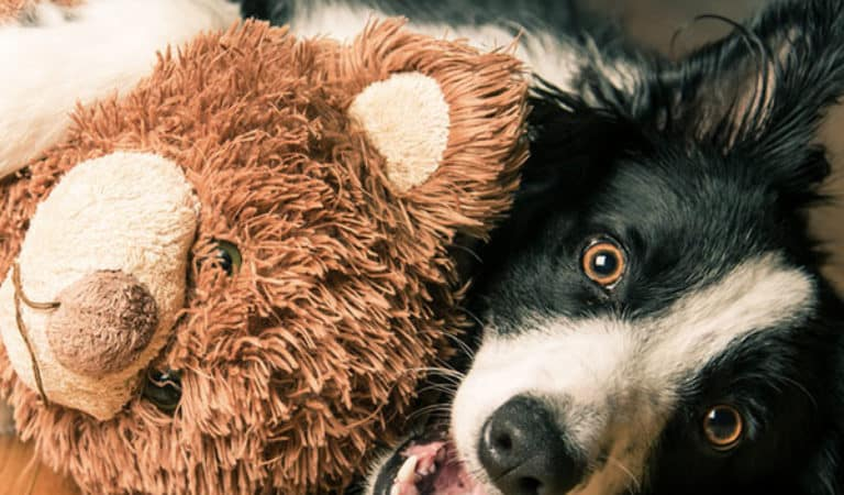 Top 10 des preuves d'amour de votre chien