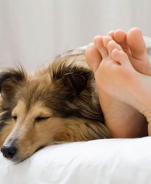 Votre chien adore s'asseoir sur vos pieds