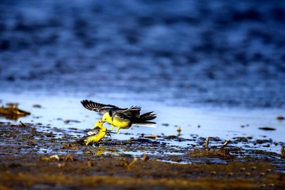 9. Bisou d'oiseaux