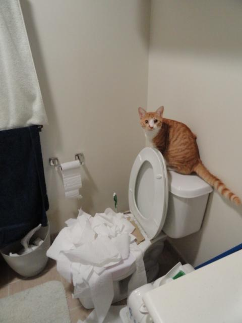 Le mystère de la ruée dans les magasins sur le papier toilette enfin expliqué !