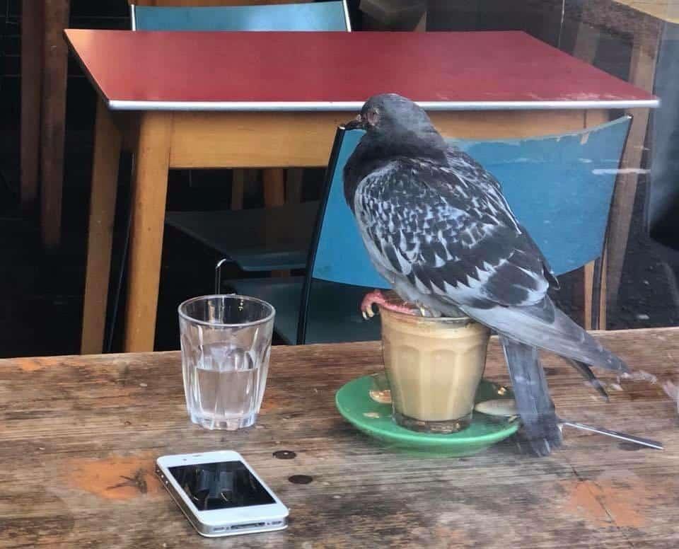 Mieux vaut se déconnecter de Twitter quand on boit son café !