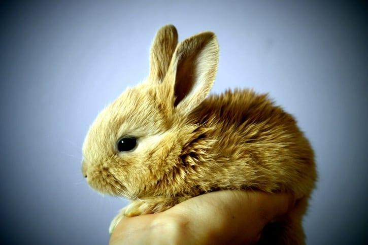7. Le lapin Avec ses grandes oreilles et sa bouille toute ronde, le lapin est l'un des animaux les plus mignons du monde, c'est certain.