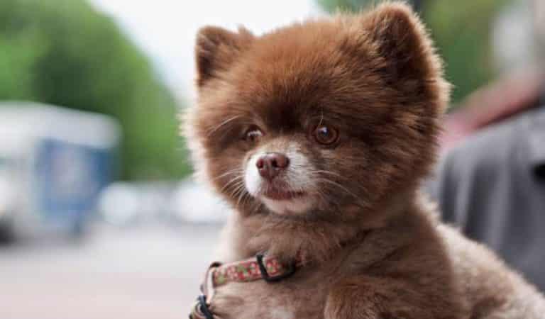 Top 15 des animaux les plus mignons du monde