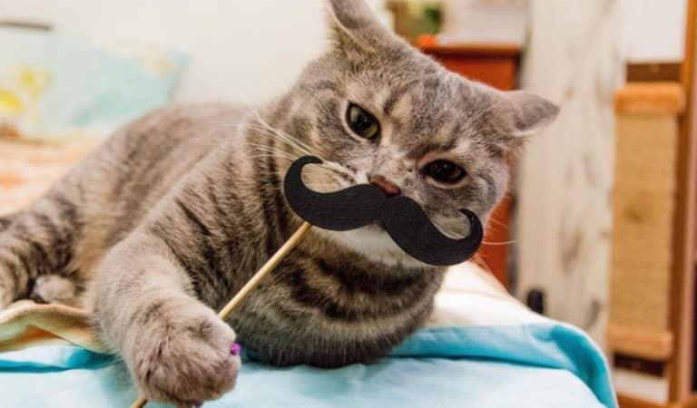 Top 10 des chats les plus drôles