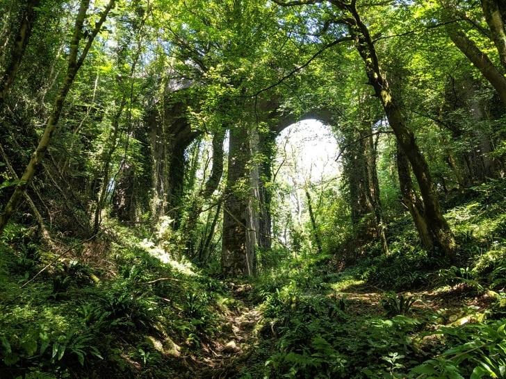 6. Les arbres et la forêt reprennent leurs droits - 21 trends