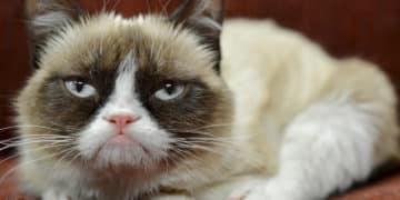 Top 11 des GIFS de chats drôles - Cover