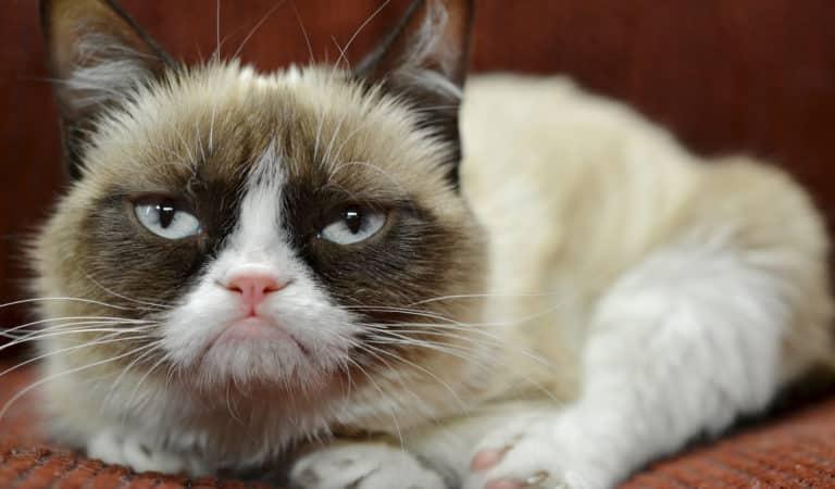 Top 11 des GIFS de chats drôles