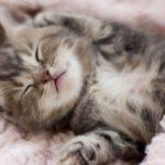 Top 11 : Les GIFs de chats adorables et câlins
