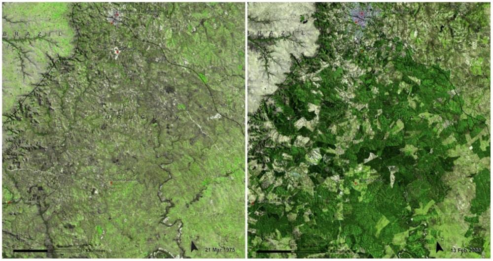 La forêt Mabira, Ouganda. Novembre 2001 - janvier 2006. - 21 Trends
