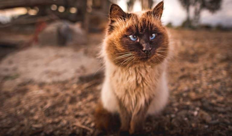 Nos meilleures publications – T'es pas un chat