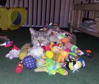 Chat avec trop de jouets
