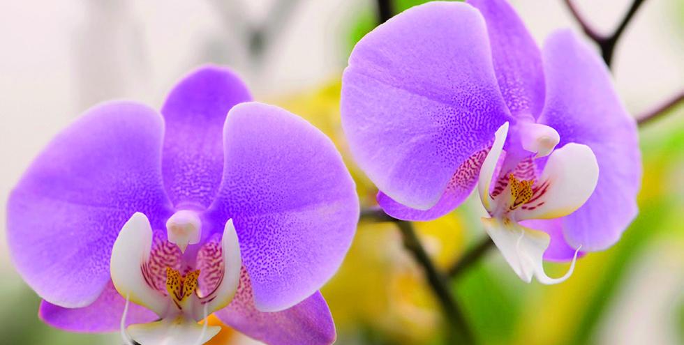 21 Trends - L'orchidée