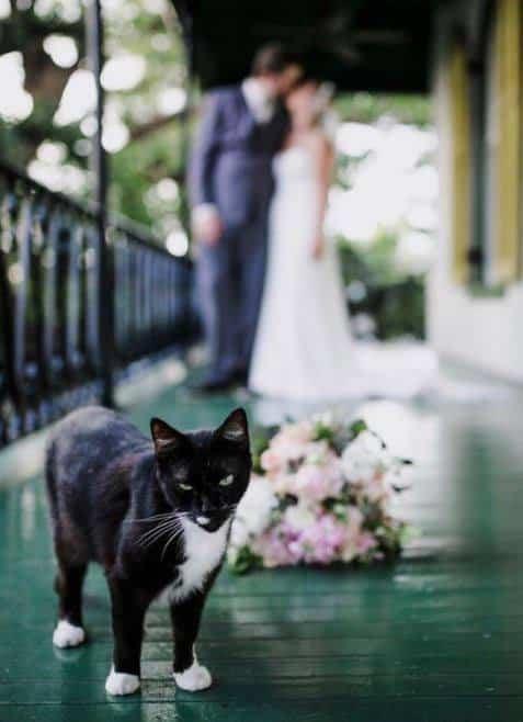 21 Trends - Le chat dans le mariage