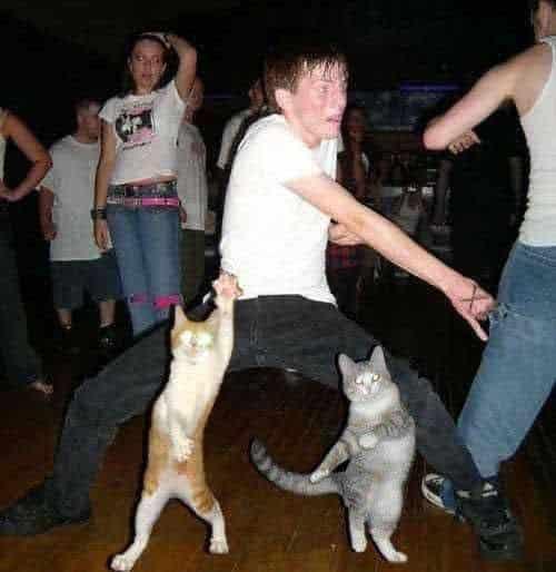 21 Trends - Le chat danseur