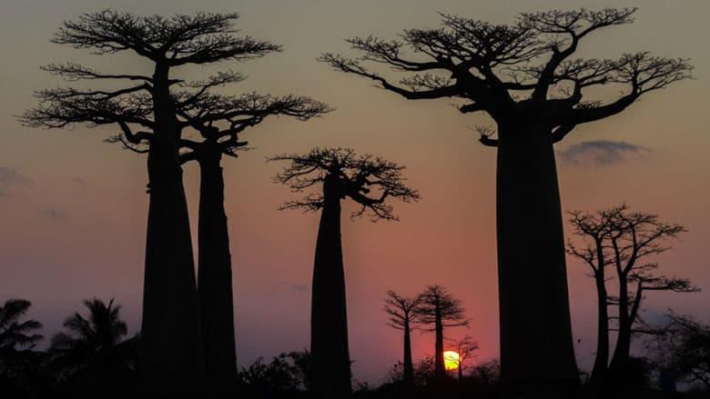 21 Trends - Avenue des Baobabs : un lieu à ne pas manquer