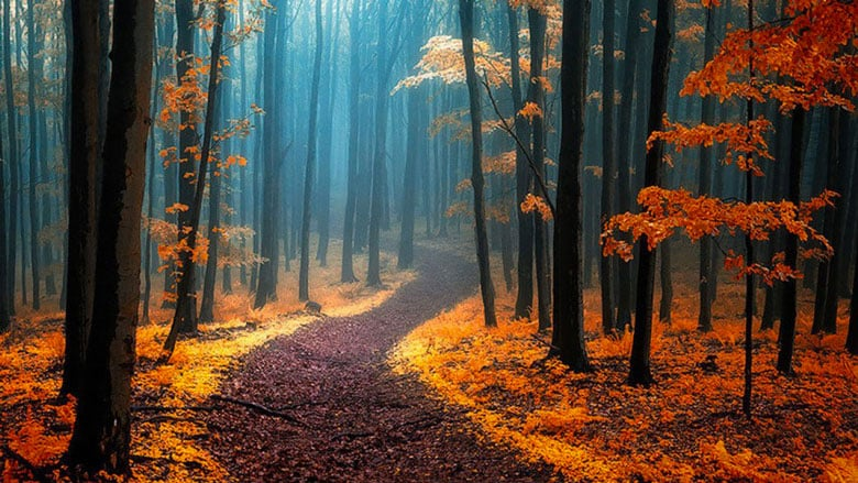 21 Trends - Les forêts des Carpates Blanches : des lieux paradisiaques