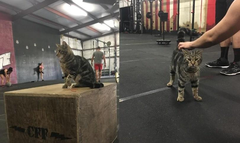 21 Trends - Le chat sportif