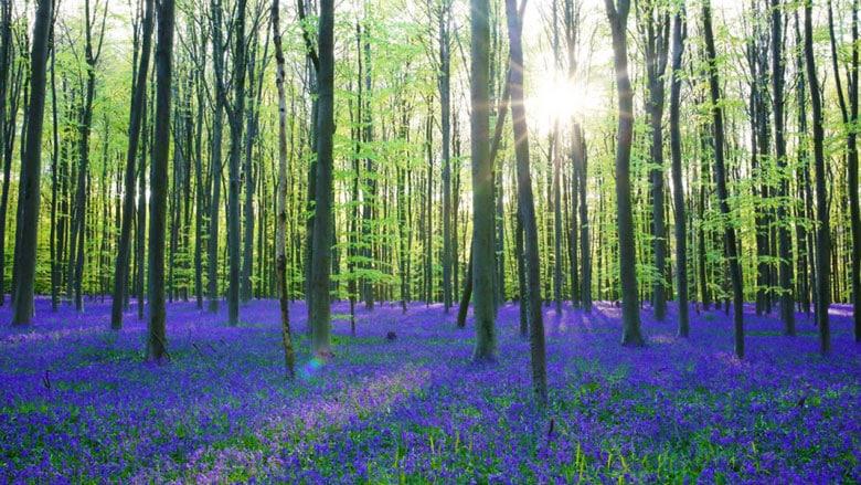 21 Trends - Bois d'Hal : la forêt belge qui passionne