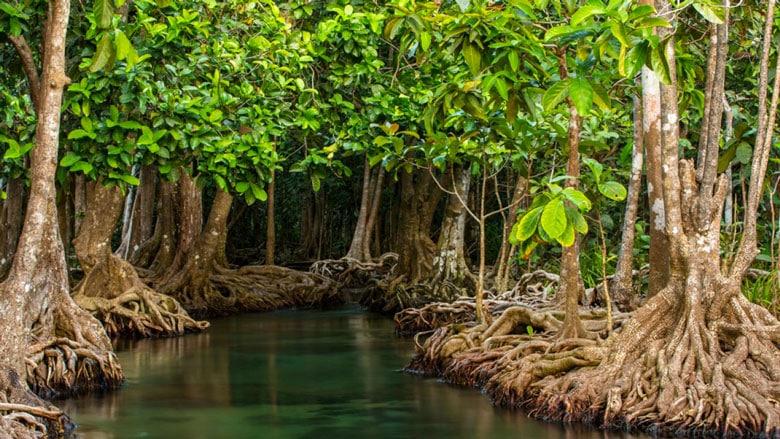 21 Trends - La forêt de Mangroves à Krabi (Thaïlande)