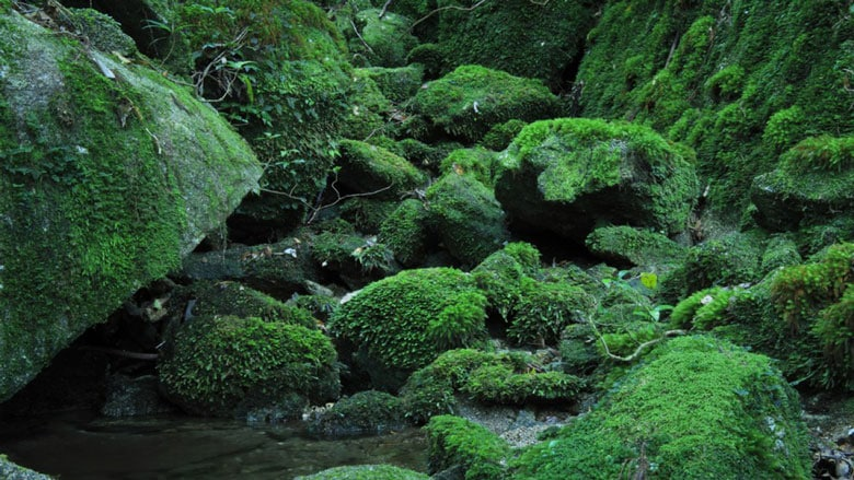 21 Trends - Au sommet du Japon : la forêt d'Yakushima